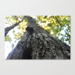 Your Natural Beauty Canvas Print