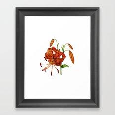 Lilium Tigrinum Framed Art Print