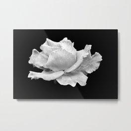 White Rose On Black Metal Print
