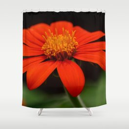 Red African Daisy Shower Curtain