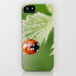 Ladybird on a nettle leaf. Norfolk, UK. iPhone Case