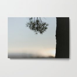 Pine tree trunk and branch Metal Print
