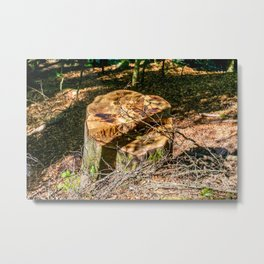 Tree Stump of cut down Tree in the Forest (orange/brown) Metal Print