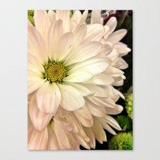 Daisy on Daisy Canvas Print