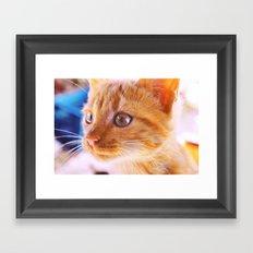 Orange cat Framed Art Print