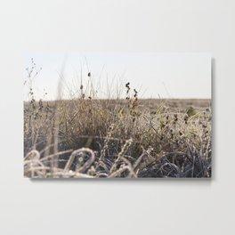 frozen dry grass close up Metal Print