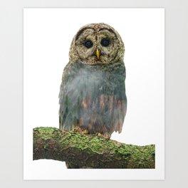 Owl Double Exposure Art Print