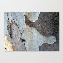 Peeling Bark Of A Eucalyptus Gum Tree Canvas Print