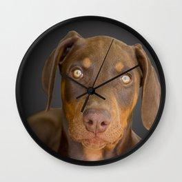 Doberman Puppy Stare Wall Clock