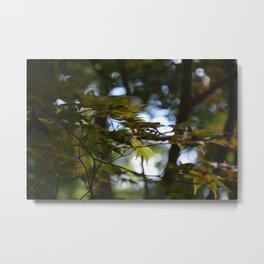 Sun-Kissed Japanese Maple Metal Print