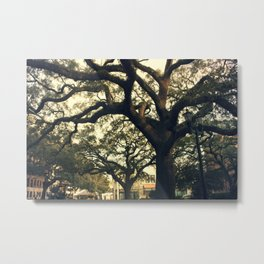 Savannah Live Oaks 2 Metal Print