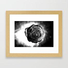 Rose 03 Framed Art Print