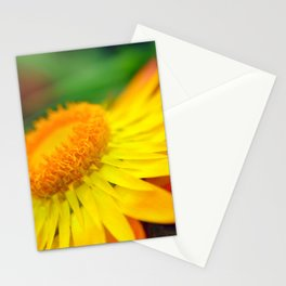 Yellow and Red Flower Macro Phot Stationery Cards