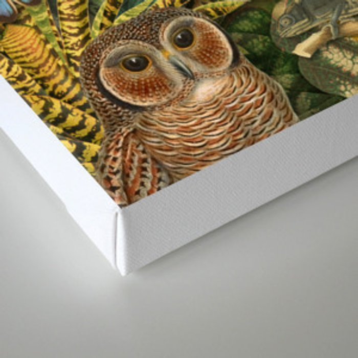 Birds Insects Plants Canvas Print