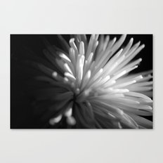 {beauty in darkness} Canvas Print