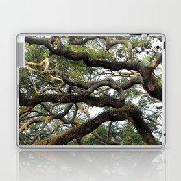 Live Oak Tree Laptop & iPad Skin