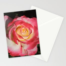 Multi-Hued Rose Stationery Cards