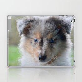 Blue-eyed Portrait of a Shetland Sheepdog Puppy Laptop & iPad Skin
