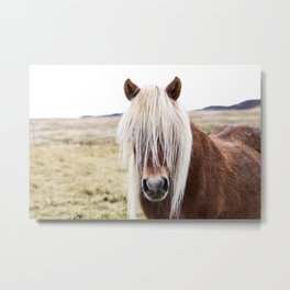 Icelandic Horse on a Farm Metal Print