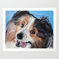 Sheltie Dog  Art Print
