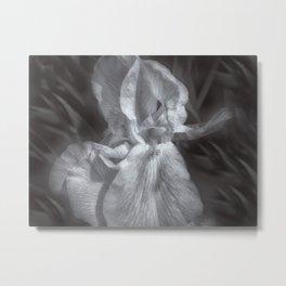 Delicate Iris Metal Print