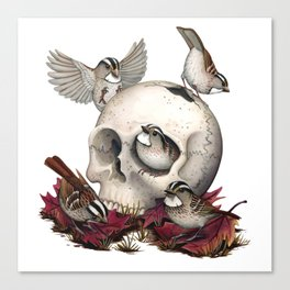 White-throated Sparrows Forage Amongst Human Remains Canvas Print