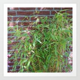 Garden Bamboo Plant Art Print