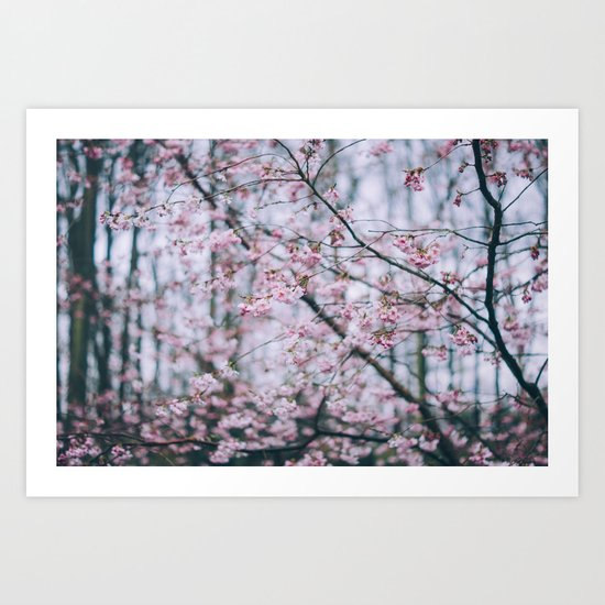 Cherry Blossom forest Art Print