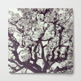 White Tree Blossom Metal Print