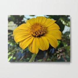 a rich yellow flower Metal Print