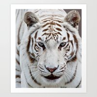 tiger Art Prints featuring TIGER TIGER by Catspaws