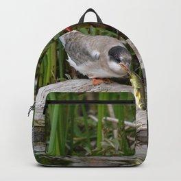 Baby Arctic Tern Feeding Backpack