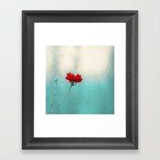 cornflower Framed Art Print