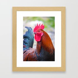 Red Rooster Framed Art Print