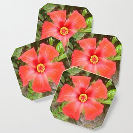 Head On Shot of a Red Tropical Hibiscus Flower Coaster