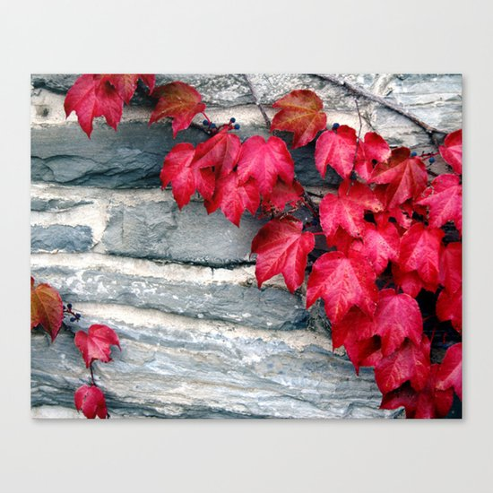 Fall's Ivy in New England Canvas Print
