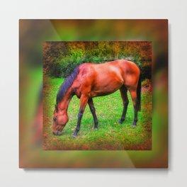 Brown horse grazing Metal Print