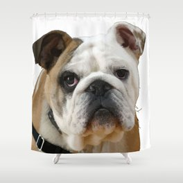 American Bulldog Background Removed Shower Curtain