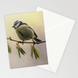 Yellow and blue tit on the branch Stationery Cards