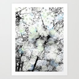 Black and white bokeh photography of a spring tree Art Print