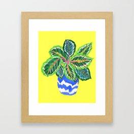 Calathea Framed Art Print