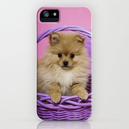Tan Pomeranian Puppy Sitting in a Purple Basket with Purple Floral Decorations and a Pink Background iPhone Case