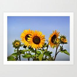 sunflower_37 Art Print