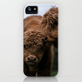 Scottish Highland Cattle Calves - Babies playing iPhone Case
