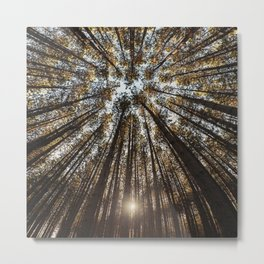 Pines Above Metal Print