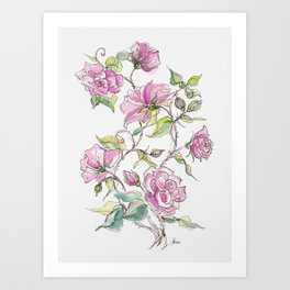 Pink Climbing Rose Art Print