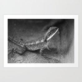Mr. Lizard Art Print