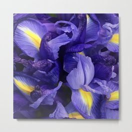 Vibrant Purple Iris Flowers Close-Up Artsy Photo Metal Print