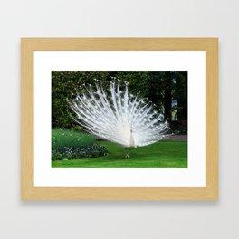 White Peacock of Isola Bella Framed Art Print