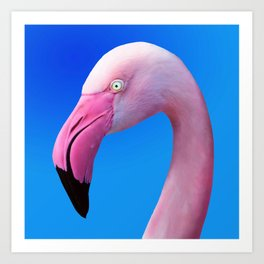 Pink Flamingo Portrait Close Up Art Print